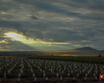 red-mountain-ava-new-vineyard-rattlesnake-mountain-sunburst-pic