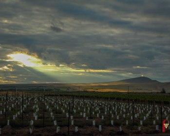 red-mountain-ava-new-vineyard-rattlesnake-mountain-sunburst-pic