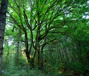 vortex tree II